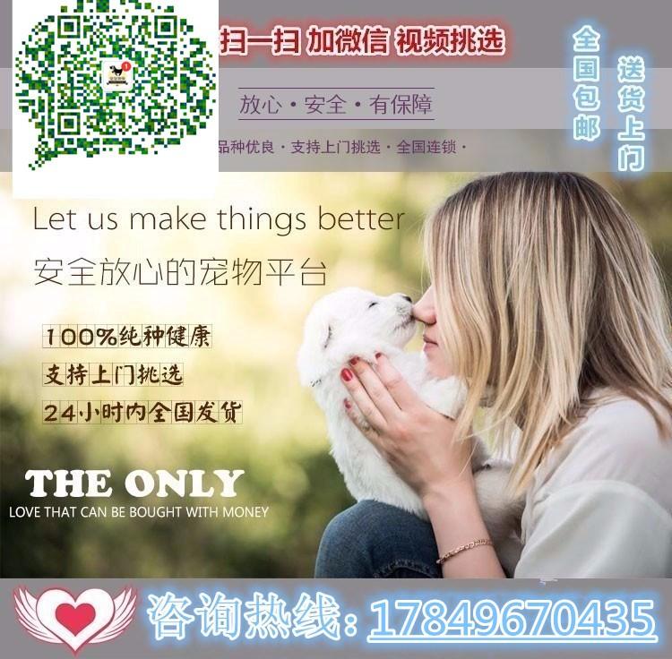 北京售纯种健康约克夏梗幼犬公母全有可挑选5