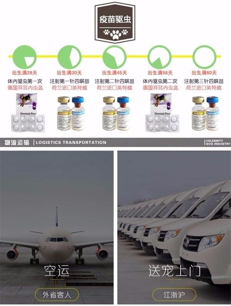 北京售纯种健康约克夏梗幼犬公母全有可挑选10