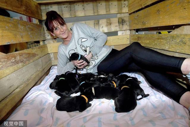 英国狗狗一胎产下21只狗宝宝 太神奇了