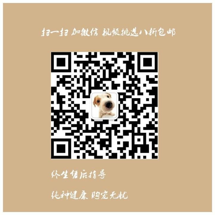长沙自家繁殖泰迪犬出售公母都有保障品质售后5