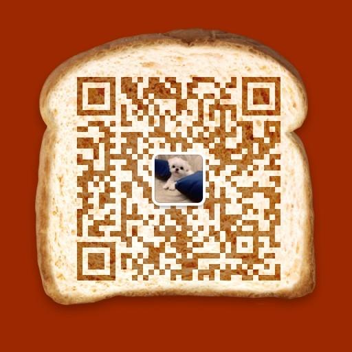 健康优秀紫舌松狮犬低价转让中 广州地区有实体店5