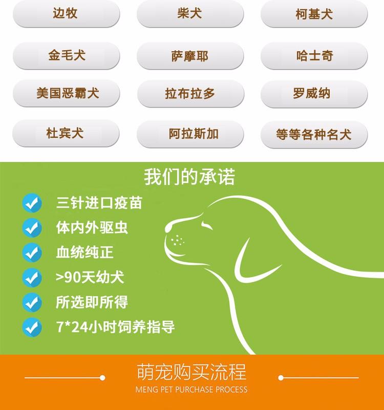 专业犬舍出售精品绵阳哈士奇犬可放心购买6