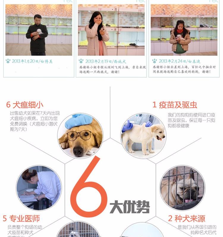 专业犬舍出售精品绵阳哈士奇犬可放心购买11