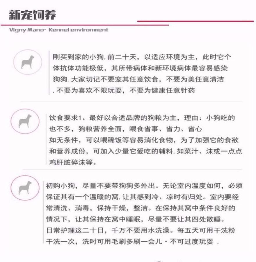 专业犬舍出售精品绵阳哈士奇犬可放心购买13