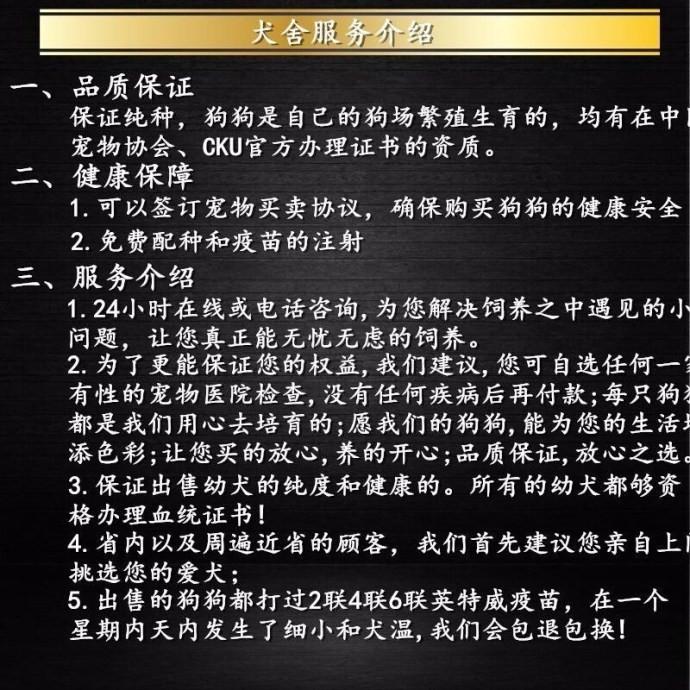 出售勇敢机灵聪明听话的广州比熊犬 带有血统证书17