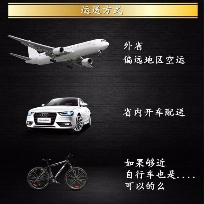 出售勇敢机灵聪明听话的广州比熊犬 带有血统证书14