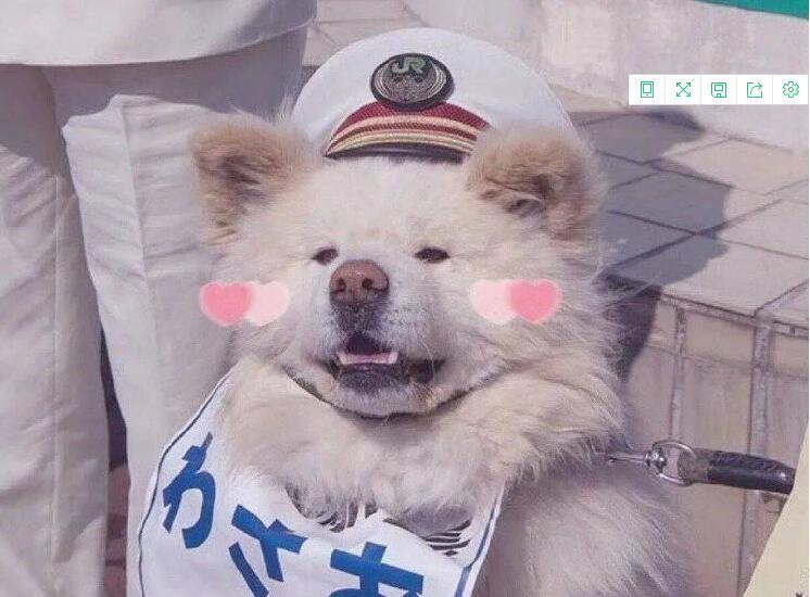 日本超人气的丑萌秋田站长走了,网友:和奶奶团聚了!