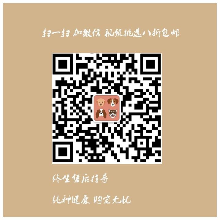 杭州养殖场低价转让多只十字脸阿拉斯加犬 狗贩子勿扰12