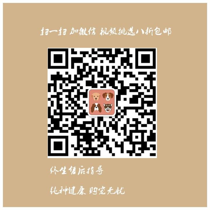 杭州养殖场低价转让多只十字脸阿拉斯加犬 狗贩子勿扰5