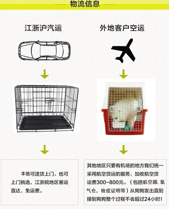 杭州养殖场低价转让多只十字脸阿拉斯加犬 狗贩子勿扰9