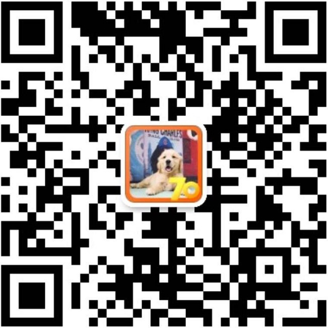 纯种犬培育中心售高品质喜乐蒂犬签质保三年可送货12