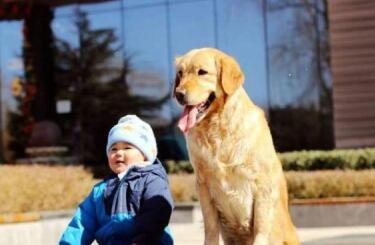 家里有孩子,养什么狗比较合适?金毛可以吗