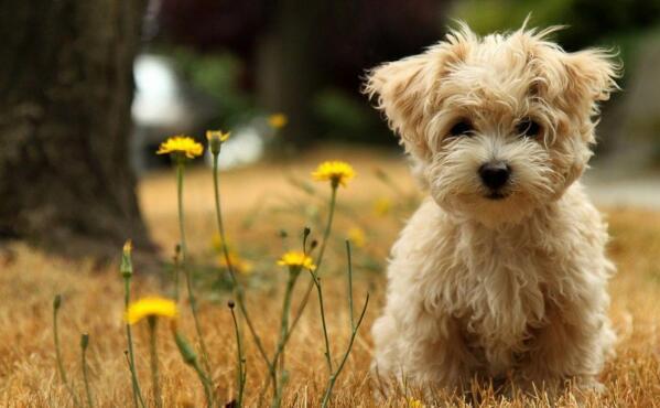 """狗狗很聪明,边牧是""""人精"""",中华田园犬更是没得说"""