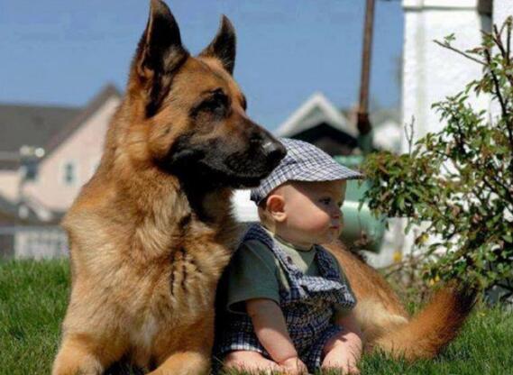 养狗狗不要以为只是能给你陪伴,有时还能救你一命