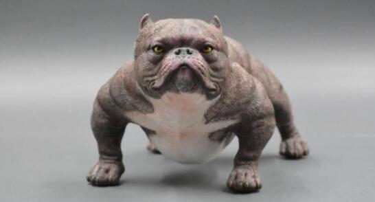 其实养一只美国恶霸犬也不错