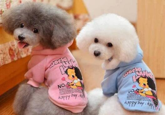 最新研究发现,宠物狗对幼童社交情绪发展有改善作用