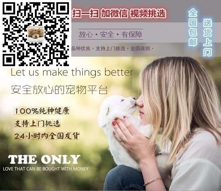 南京什么地方有卖罗威纳南京罗威纳幼犬怎么卖5