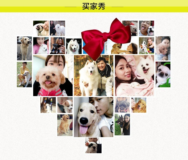 哈尔滨实体犬舍直销阿拉斯加雪橇犬 身体健康可签协议6