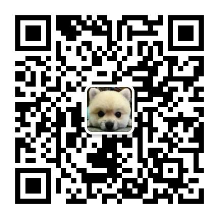 急售白色赛级玩具体贵宾犬宝宝5