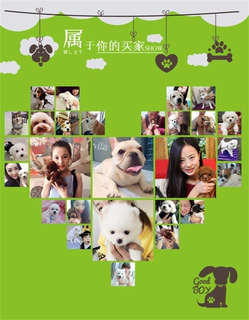 昆明犬舍直销纯种博美幼犬 信誉售后服务 保障品质9