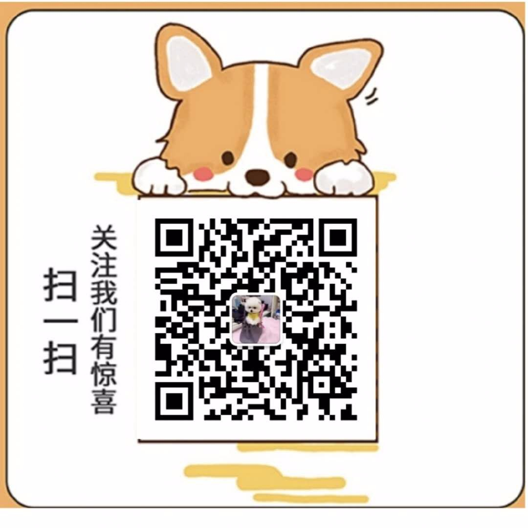 贵阳出售颜色齐全身体健康美国斗牛犬可刷卡可视频5