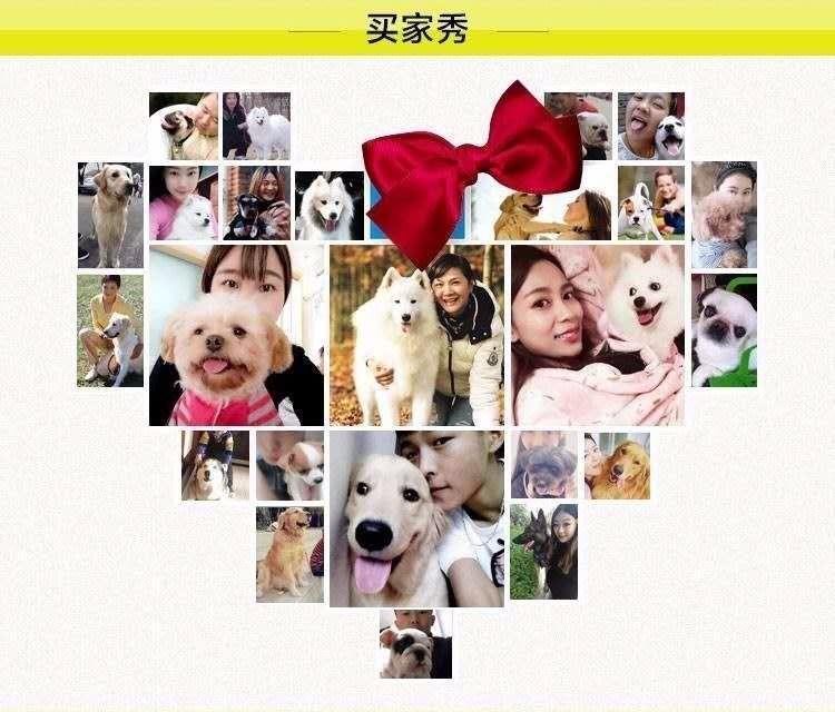 贵阳出售颜色齐全身体健康美国斗牛犬可刷卡可视频13