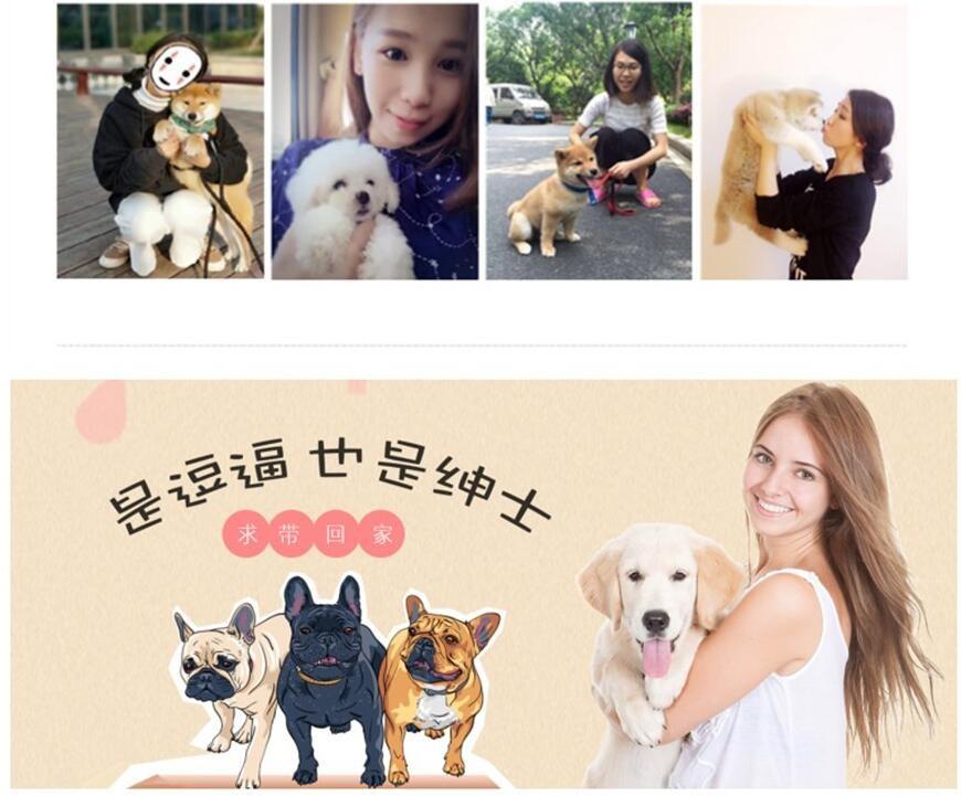 杭州哪里有自家繁殖的纯种憨厚老实的卡斯罗犬宝宝出售12