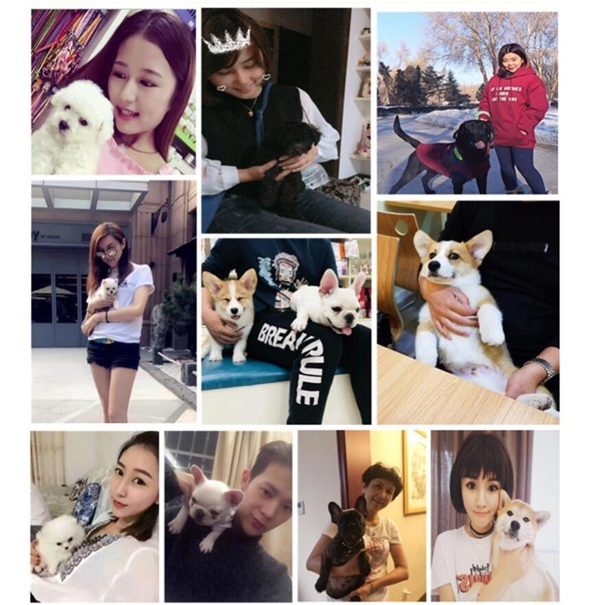 杭州哪里有自家繁殖的纯种憨厚老实的卡斯罗犬宝宝出售11