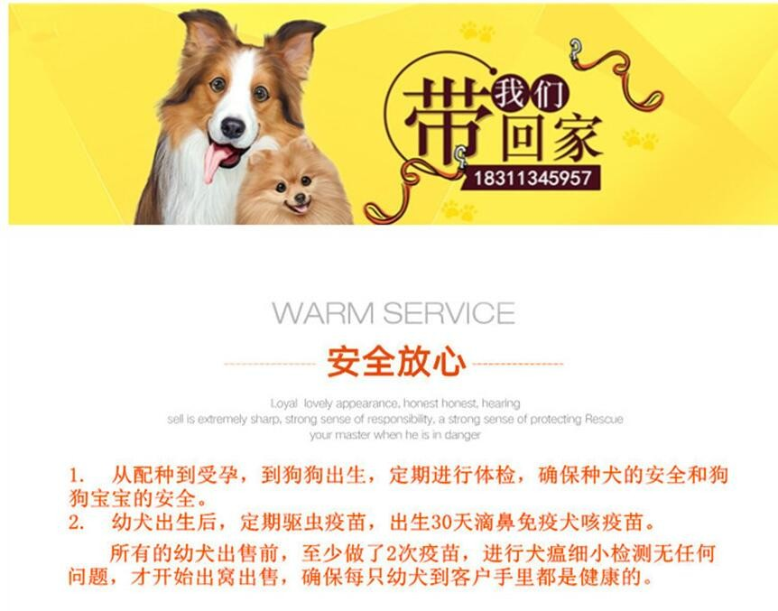 杭州哪里有自家繁殖的纯种憨厚老实的卡斯罗犬宝宝出售8