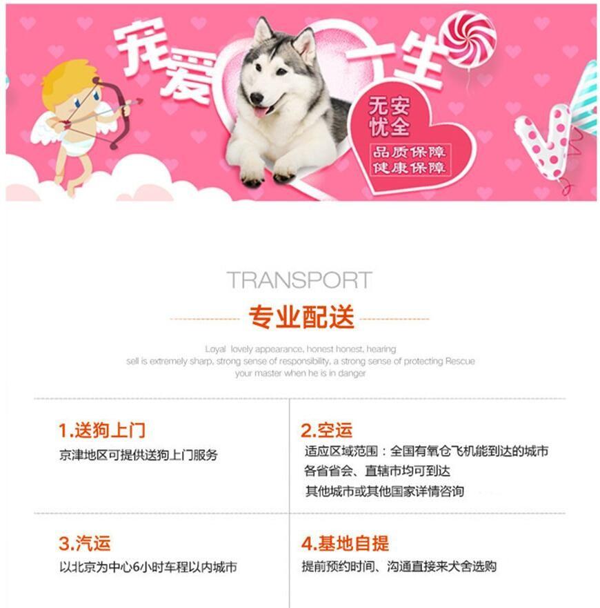 北京迷你雪纳瑞巨型雪纳瑞纯种雪纳瑞犬购买签活体协议9
