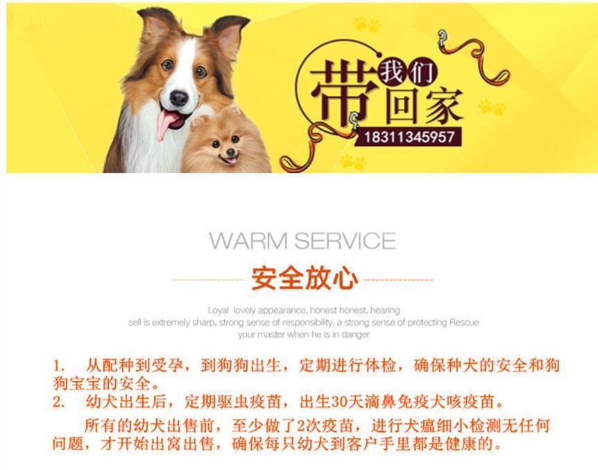 北京迷你雪纳瑞巨型雪纳瑞纯种雪纳瑞犬购买签活体协议8