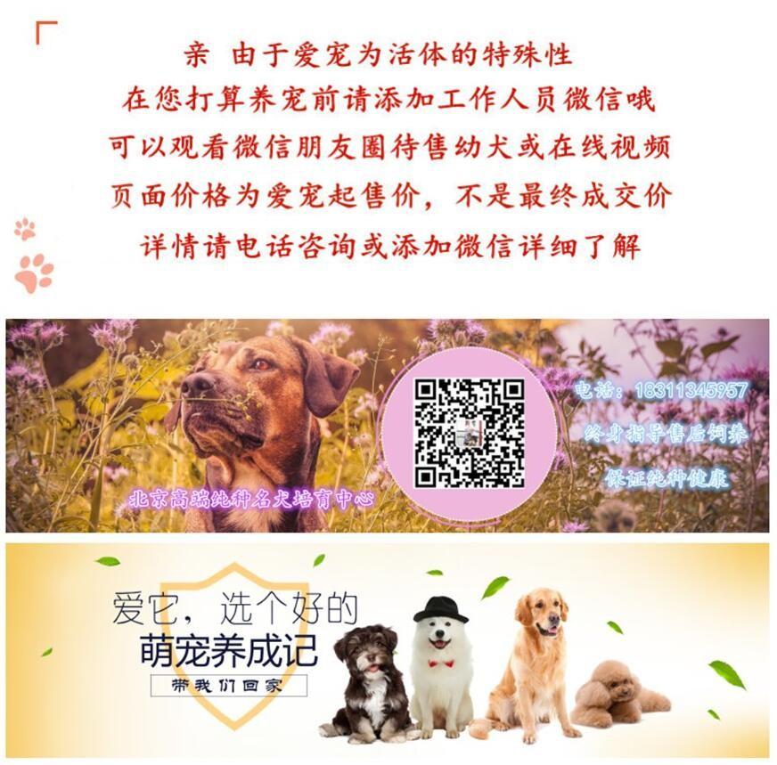 北京迷你雪纳瑞巨型雪纳瑞纯种雪纳瑞犬购买签活体协议6
