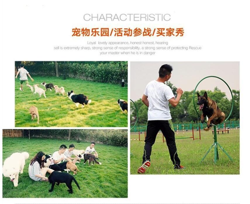 北京迷你雪纳瑞巨型雪纳瑞纯种雪纳瑞犬购买签活体协议10