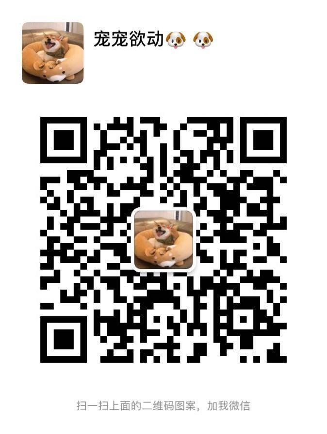 促销价直销双十字西安阿拉斯加雪橇犬 可办理血统证书5