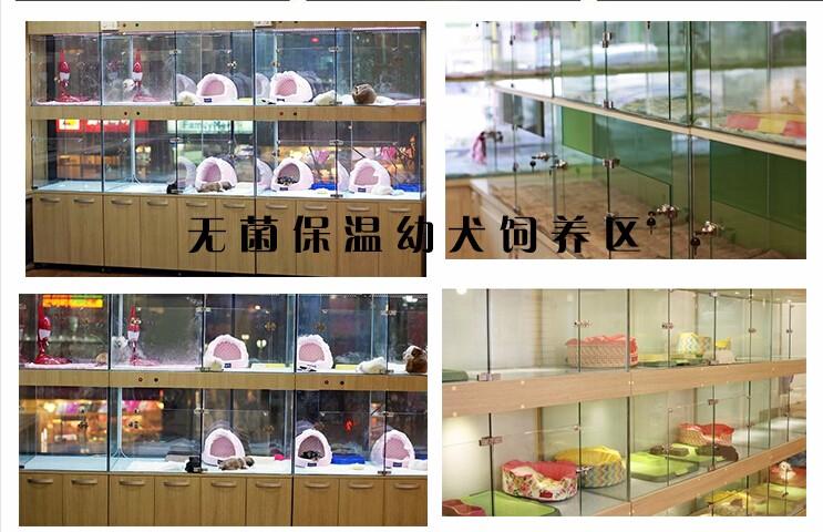 杭州本地狗场出售优秀哈士奇 赛级品质保证身体健康7