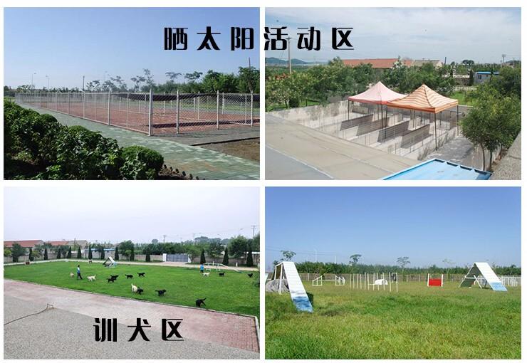 杭州本地狗场出售优秀哈士奇 赛级品质保证身体健康9