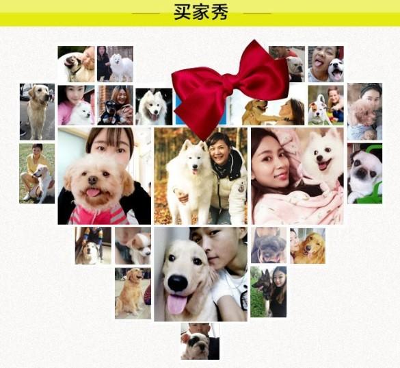 杭州专业狗场繁殖萨摩耶犬幼犬 包养活签协议有保障13