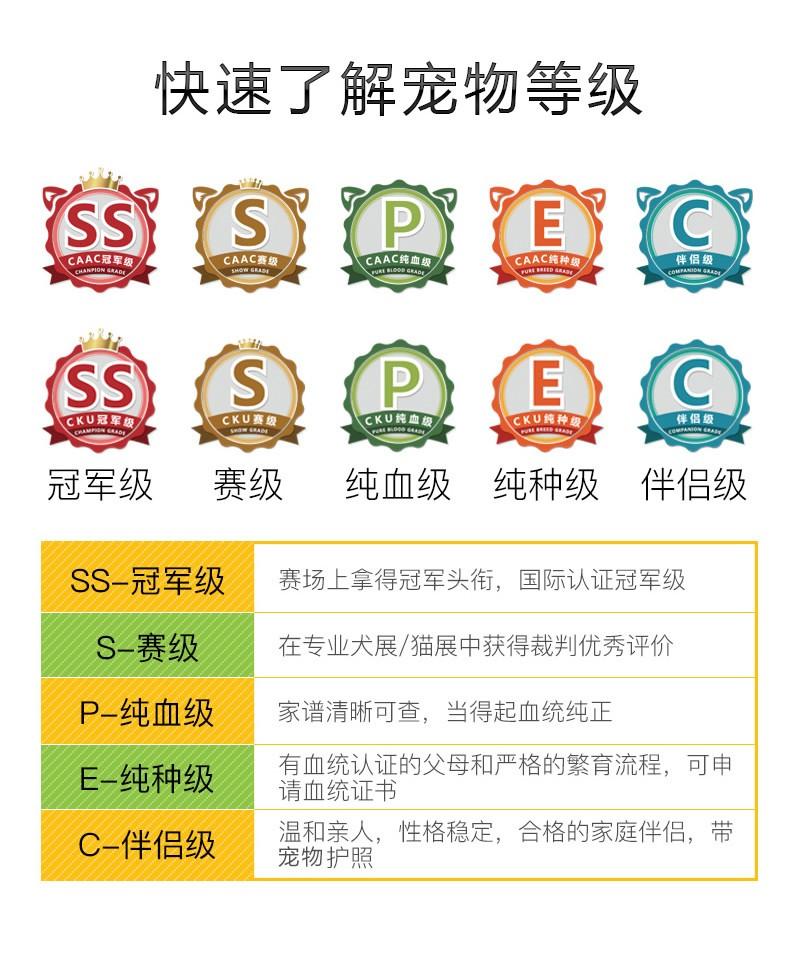特价出售可爱小体郑州雪纳瑞 颜色齐全多只可选择9