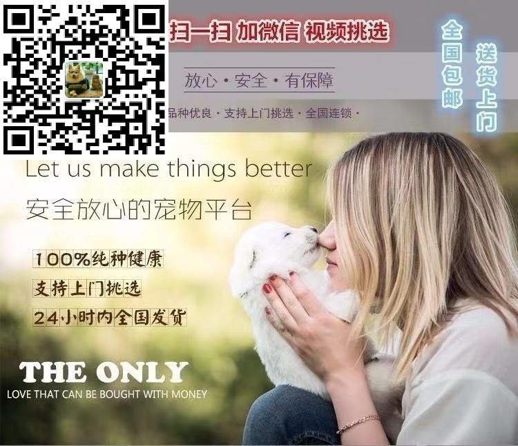 南京出售纯种贵宾幼犬, 健康终身保障签协议送狗用品5