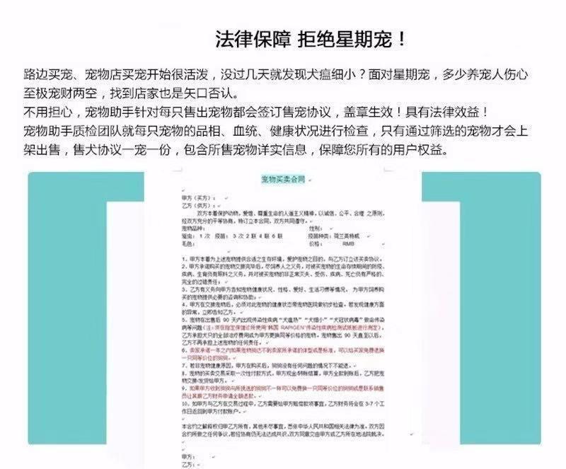 南京出售纯种贵宾幼犬, 健康终身保障签协议送狗用品6