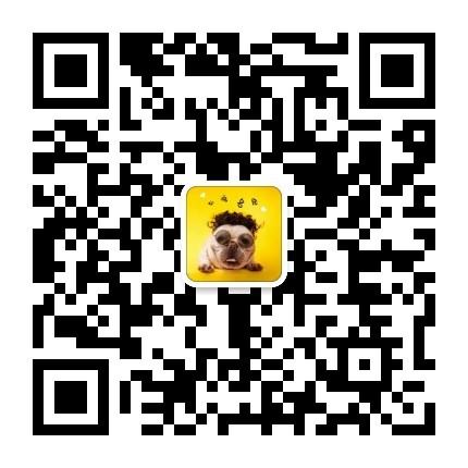 上海出售繁殖小体比熊犬幼犬血统纯正健康品质保证5