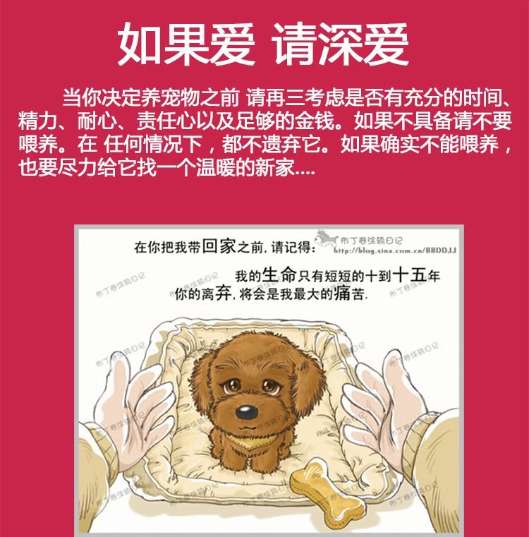 极品博美犬 保纯种保健康 CKU认证犬舍  一犬一证13