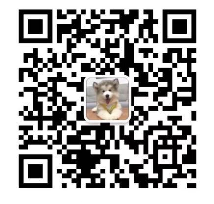 出售大骨架大头版身体健康的合肥拉布拉多犬 非诚勿扰5