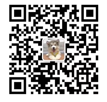 出售大骨架大头版身体健康的合肥拉布拉多犬 非诚勿扰14