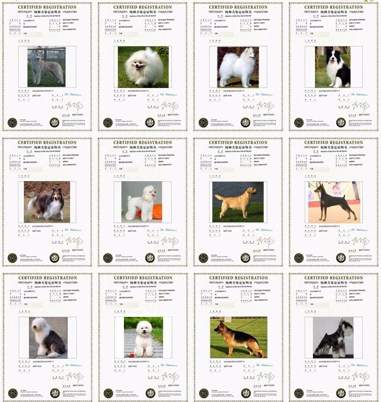自家狗狗繁殖的纯种杜高幼犬怎么卖,欢迎上门选购10