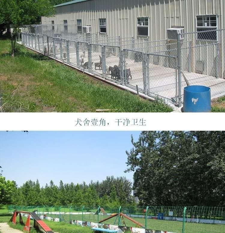 繁殖基地出售多种颜色的中亚牧羊犬价格美丽非诚勿扰10