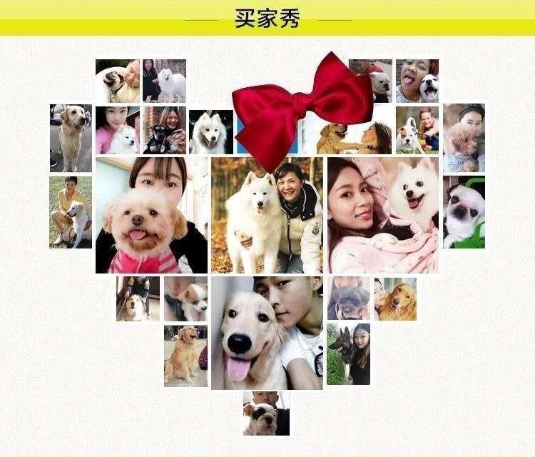 繁殖基地出售多种颜色的中亚牧羊犬价格美丽非诚勿扰12
