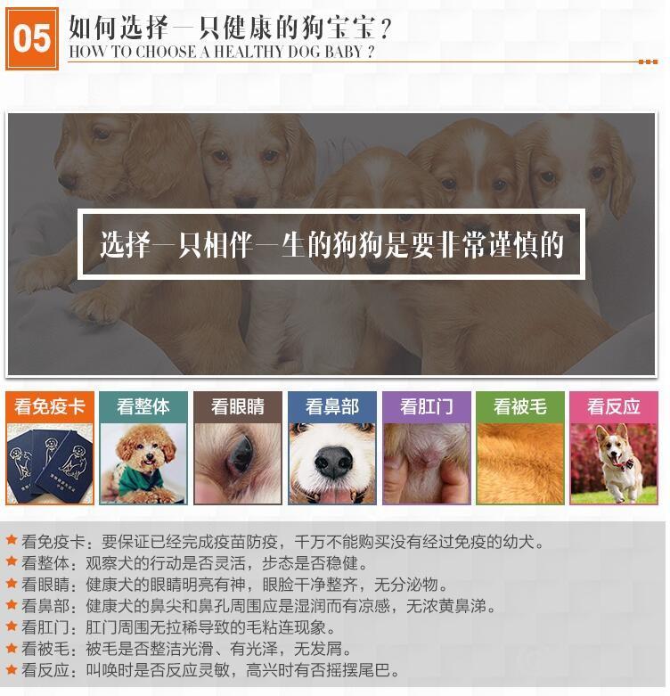 贵阳实体店热卖斑点狗颜色齐全微信选狗直接视频10