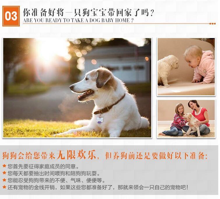 贵阳实体店热卖斑点狗颜色齐全微信选狗直接视频8