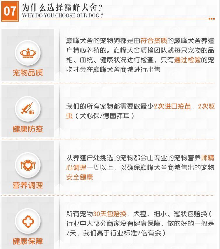 贵阳实体店热卖斑点狗颜色齐全微信选狗直接视频11